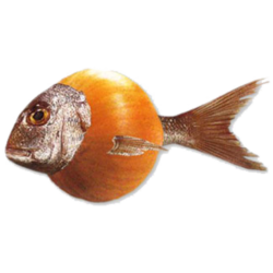 Zwiebelfischverlag
